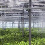 Instalação em Estufa de Plantas